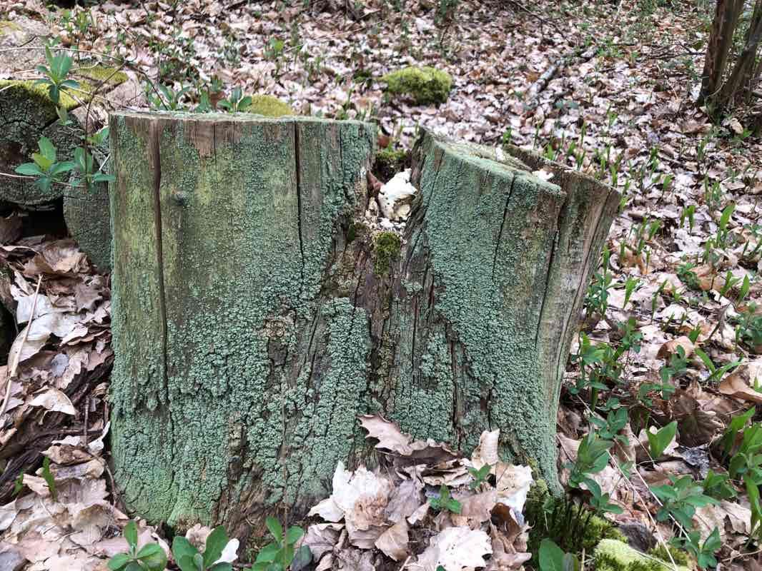 Bois De La Saulx bois des carrés marcoussis walk trail - essonne, france   pacer